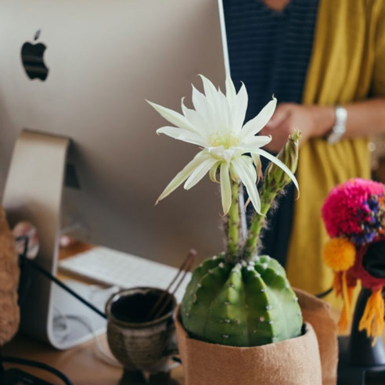 Sensitivity Training - Woman at a desk with a flower